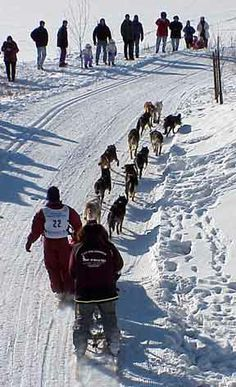 Overhead view of Iditarod