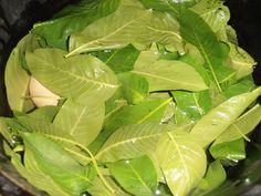 Cum vopsim ouale in mod natural? Plant Leaves, Vitamins, Easter, Vegetables, Nature, Plants, Food, Knits, Eggs