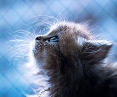 Daisy, il gattino più tenero del mondo - GIZZETA