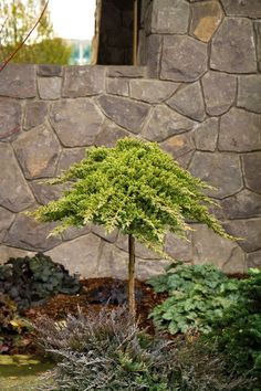Miniature Japanese Garden Zen