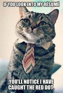 14 Times Animals Went To a Job Interview But Didn't Really Nail It - CutesyPooh