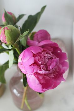 Who doesn't love pink peonies?