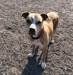 ⚠️This is a plea for help for a Colorado dog, who is shutting down after five months at the Adams County Animal Shelter.PLEASE HELP ME !! I DONT KNOW HOW TO INDERSTAND WHY I AM HERE ,OR HOW LONG I MIGHT BE (NATIVE AMERICANS DIE IN JAIL FROM DEPPRESSION TOO !)DONT LET ME DIE IN HERE FROM SADNESS ,I AM A GOOD DOG!!!!