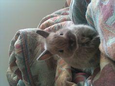 bunny baby - one tiny fluff!!!