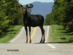 ✰ Moose Alley  Route 3  Pittsburg, New Hampshire. Some day I will see a moose when I'm there!