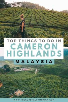 Malaysia Itinerary, Malaysia Travel Guide, Travel Guides, Travel Tips, Travel Goals, Budget Travel, Travel Destinations, Cameron Highlands, Japanese Travel