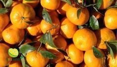 Anche per questa magnifica stagione, la disponibilità dei mandarini biologici si è esaurita. Sicuramente ancora più buoni, vi danno appuntamento all'anno prossimo. www.agrumando.it