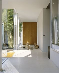 modern hallway comfortably fits 2 dogs  ---   Cohodes Residence