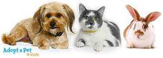 How does it work to adopt a pet? » AdoptaPet.com Blog