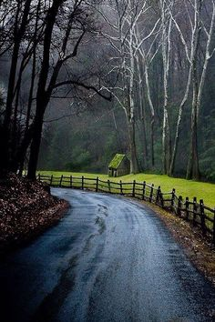 Trees | Wooden Fence | Eerie Art | Wet Country Road