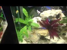 Aqua one 620t cichlid aquarium tips