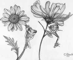 Beautiful drawings of flowers are hard to find. Discover some great pencil drawings of flowers selected from hundreds of flower drawings drawn. Pencil Drawings Of Flowers, Flower Sketches, Drawing Sketches, Pencil Sketching, Draw Flowers, Drawing Tips, Tattoo Drawings, Body Art Tattoos, Art Drawings