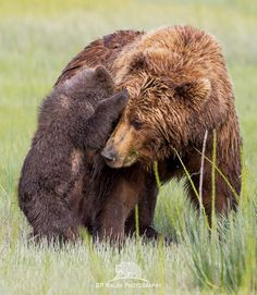 A Secret for Mom Photo by Pattie Walsh — National Geographic Your Shot Ursa Major, Bear Cubs, My Spirit Animal, National Geographic Photos, Your Shot, Black Bear, Mom And Baby, Amazing Photography, Baby Animals