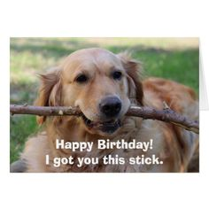 Funny Golden Retriever Dog Humor Happy Birthday - tap, personalize, buy right now! Happy Birthday Wishes For A Friend, Funny Happy Birthday Pictures, Funny Happy Birthday Wishes, Birthday Wishes For Him, Happy Birthday Dog, Happy Birthday Greetings, Happy Birthdays, Birthday Blessings, Boyfriend Birthday