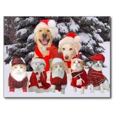 Image Result For Dog Christmas Cards Sayings