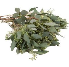 $8 per bunch of 7 stems, 25 bunches. WholeBlossoms.com. Wholesale Seeded Eucalyptus
