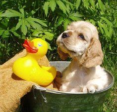 ...love me, love my...duck?????