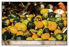 Herbstliche Früchte #petermarbaise #tuxoche