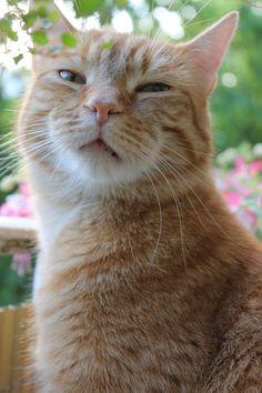 My fave pink #Milo #ginger boy #ginger-bee