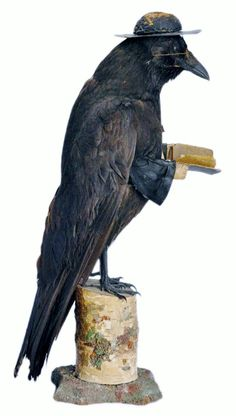 LITERATE BIRD with Book! Antique Victorian taxidermy of a raven portrayed as a preacher. Circa 1900. Fitted with horn rim glasses, a white cross, hands, a bible and a typical minister's hat. 17 inches tall ...  Perfect for the home library! Alas, this beauty has already been sold. Better luck next time, gang!