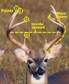 89f3fe7c76a354d304aa02f1198631b2 where do you exactly shoot a deer? pictures to show you where