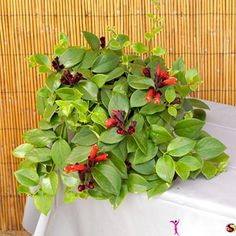 images of house plants | gardening house plants house plants with small flowers decorate your ...