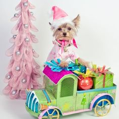 Little Yorkie dressed for the holidays!!! Bebe'!!! Cute little holiday scene!!!