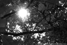 Through the tree branches (in black and white). #photography