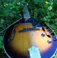 #mandolin #mandolinpicks #image #guitarpicks #playguitar #electricguitar #acousticguitar #plectrum #picks #instapick #instagood #instagram #summertime #westcoast #life