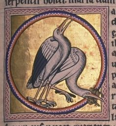 """The Aberdeen Bestiary-f49r """"Storks are devoted to their young, shedding many feathers for their protection. They eat snakes."""" (Two recognisable storks in a roundel. Although the stork is only recorded once in the middle ages as a visitor to Britain, the Aberdeen artist has created a remarkably accurate portrait of the bird (and the frog). The original source for the illustration must have been made on the Continent by someone who had observed storks.)"""