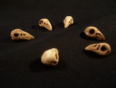 Handmade Faux Bone Polymer Clay Raven Skull by 3StarvingArtists