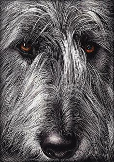 The Largest Irish Wolfhound | New Comments for Monday, October 3rd, 2011