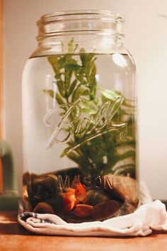 DIY Mason Jar Fish Tank with river rocks and a live plant. Perfect present for the 1st day of Christmas Advent!