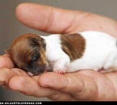Baby puppy it is ADORABLE