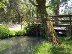 Imatge ,ja deseperaguda en l'entorn  de l'estany de Banyoles.  f .S Bosch