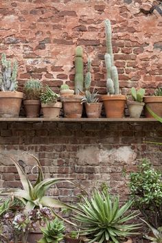 cactus and succulents Green Garden, Garden Plants, Indoor Plants, Potted Plants, Desert Plants, Cactus Y Suculentas, Green Life, Plant Design, Cacti And Succulents