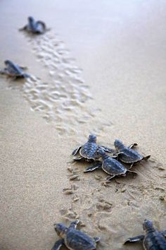 Waiting to see the baby sea turtles hatch was one of the most fun things ive ever done and is a favorite memory of Florida!