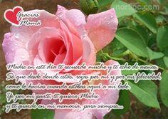 Madre te quiero y te guardo en mi memoria, para siempre