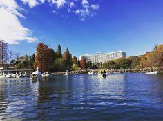 Actually, I always don't ride on a Swan boat because sight is no good. * * * * #吉祥寺 #井の頭公園 #kichijoji #inokashirapark #photographer #tokyo #memory #morning #running #jogging #trailrunning #workout #japan #キラリナ #はなこみち #instalike #instagram #マルイ#東急裏 #番頭 #コピス #山 #肉 #抹茶 #お茶