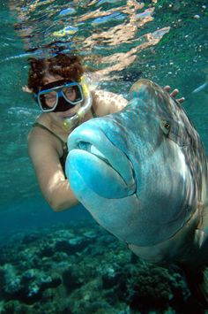 Great Barrier Reef Qld, Australia. My wife Colleen with a Ble Wrasse (2006)