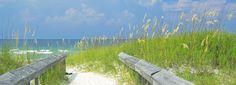 Arroz de costa en la costa del Golfo en Alabama