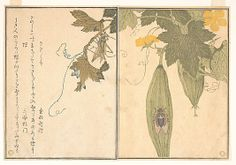 Grasshopper and Cicada (Kirigirisu and Semi), from Picture Book of Selected Insects with Crazy Poems (Ehon Mushi Erabi) Kitagawa Utamaro (Japanese, 1753–1806) Period: Edo period (1615–1868) Date: 1788 Culture: Japan Medium: Polychrome woodblock print (book page); ink and color on paper