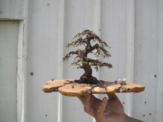 So cool, Bonsai trees made from wire.