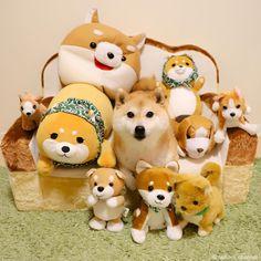 柴犬だいふくさんはInstagramを利用しています:「大家族スペシャルなんつって❤️おやふくー Which one is not like others? ha ha #大家族 #ビッグダディ不在」