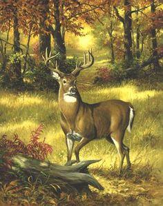 Linda Picken Art Studio / Forest Buck.jpg