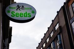 seeds in Amsterdam
