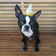 Party Pup!