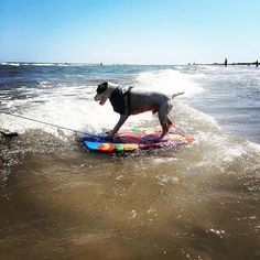 Happy #nationaldogday! We  our pups!  #portaransastex #portaransas #portaransastx #beach #fishing #surfing #boat #summer #Texas #MustangIsland #PadreIsland #CorpusChristi #AransasPass #Rockport #gulfcoast #bobhallpier #horacecaldwellpier #saltlife #photooftheday #atx #igtexas Don't miss any #PortA posts! Like comment and visit our page to turn on notifications. --- --- --- Follow us for more of this beach-ness. Show us what youre enjoying in #PortA by tagging us @portaransastex or…