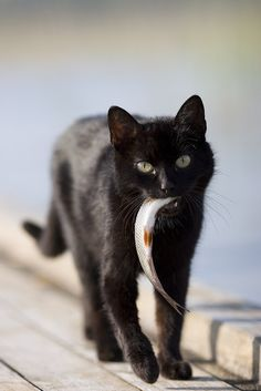 Mahlzeit! Miau.
