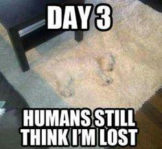 Reminds me of barley:)